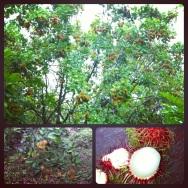 Fruit platation